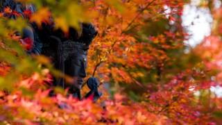 能登のあじさい寺・平等寺の紅葉が渋かった【周辺のおススメグルメ付き】
