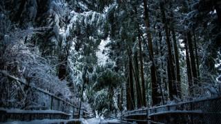 本場の京都より雪が多い「金沢の竹林の道」の雪景色をどうぞ☆