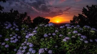 まだ間に合う!石川県内のおすすめ紫陽花スポット4つ【金沢周辺メイン】