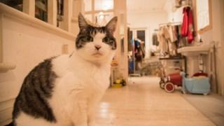 猫写真展inホームズマーケットが終了しました。次回は1月末から金沢市内の町家にて行います。