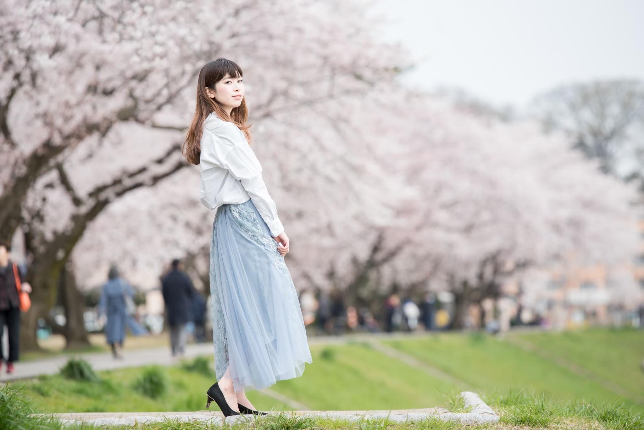 北陸の桜ポートレート