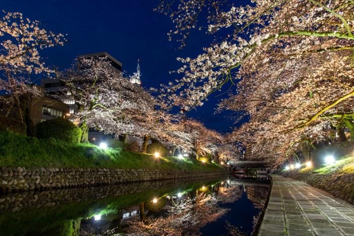 富山市松川沿いの夜桜ライトアップ