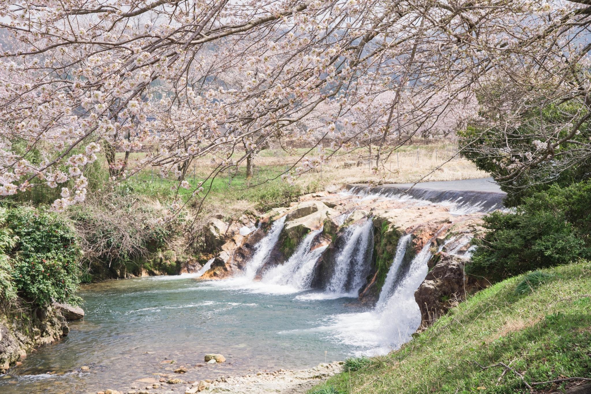 小松十二が滝と桜