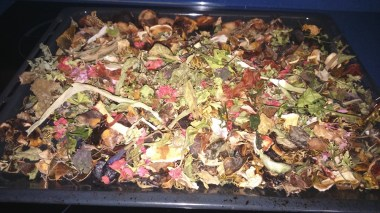 Homemade compost 1