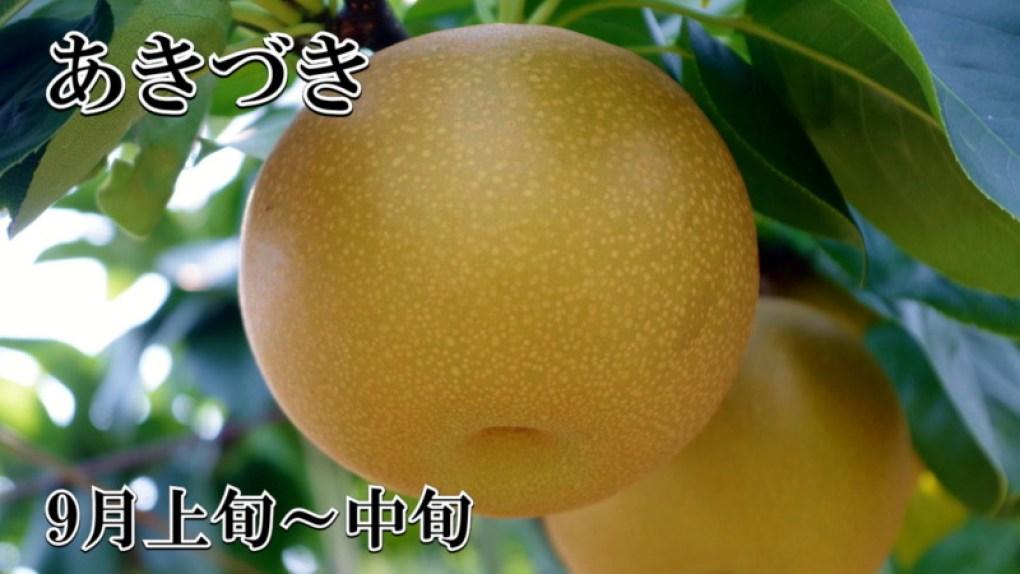 梨 あきづき