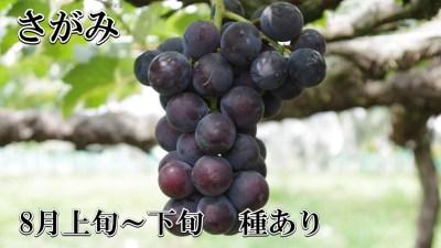ブドウ さがみ 種あり