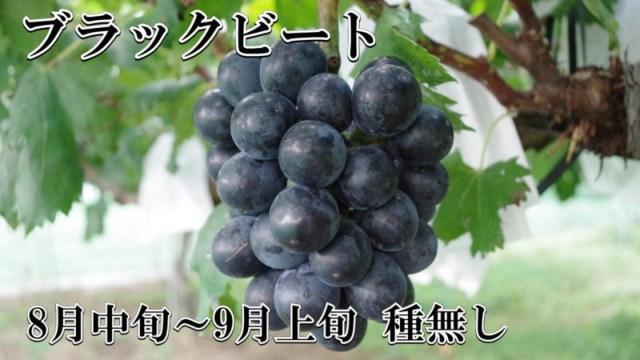 ブドウ ブラックビート 種無し