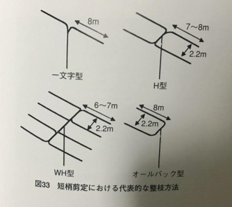 ブドウの短梢剪定のメリット・デメリットを解説 52
