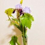 季節の花 48