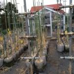 苗場の作り方 99