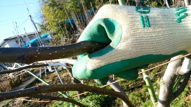 梨の稔枝鋏・幹割り鋏(バネ・止革付)210mmの性能を解説【梨の捻枝(ねんし)が簡単にできるおすすめ剪定鋏】 290