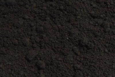 フィンガーライムの栽培·育て方を解説【原産国と日本の環境を比較して分かったこと】 838