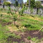 V字ジョイントの苗を定植する時のポイントと注意点を解説 24