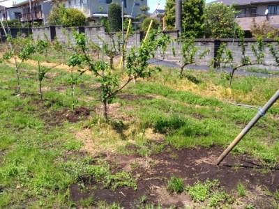 V字ジョイントの苗を定植する時のポイントと注意点を解説 2