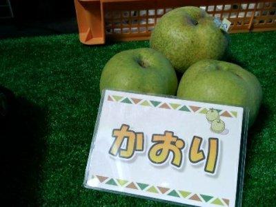 【2017/9/19】かおり 梨の収穫! 4