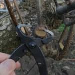 梨の剪定·誘引·捻枝に使っている道具一覧【まとめ】 8