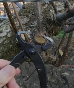 梨の剪定·誘引·捻枝に使っている道具一覧【まとめ】 39