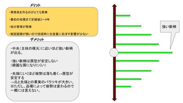 【短梢剪定の種類】各々の樹形のメリット・デメリットを解説 53