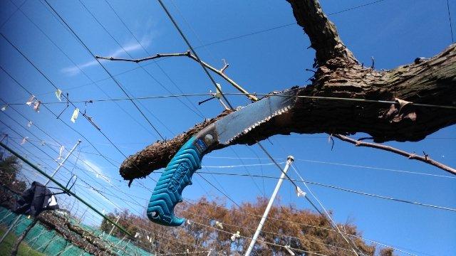 【改植】ブドウの木の入れ替えで生産量UPを目指す 58