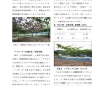 キウイの台木