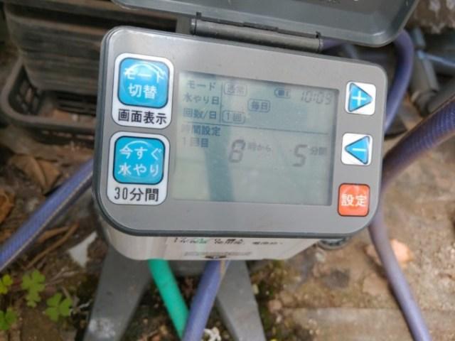 【フィンガーライムの灌水方法】ポット栽培における季節ごとの灌水回数と時間 39