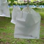 【ブドウの袋かけ】袋かけの時期·袋かけをする理由·ブドウの袋の種類を解説 8