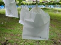 【ブドウの袋かけ】袋かけの時期·袋かけをする理由·ブドウの袋の種類を解説 13