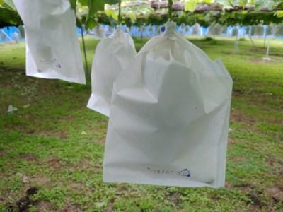 【ブドウの袋かけの仕方】袋かけの時期や袋の種類、品種別のサイズを紹介 29