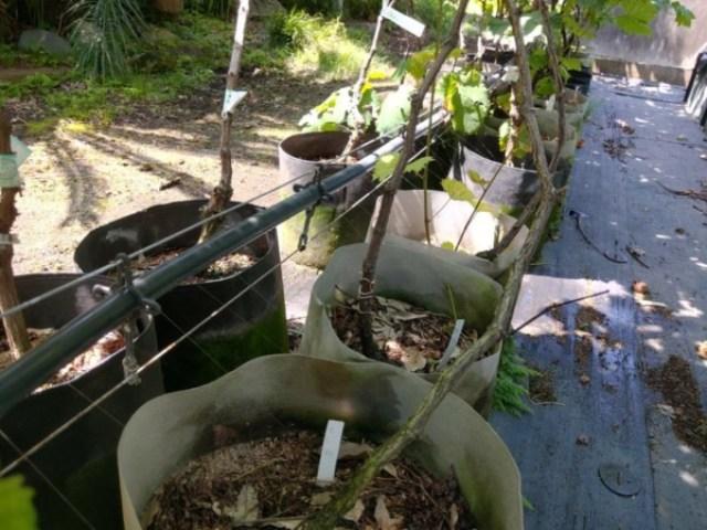 【エバフローの種類と設置方法】苗木の潅水方法を解説 27