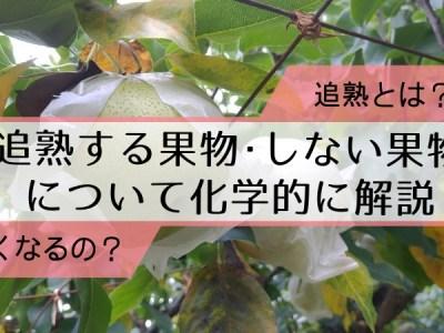 【追熟とは?】追熟する果物・しない果物について化学的に解説 31