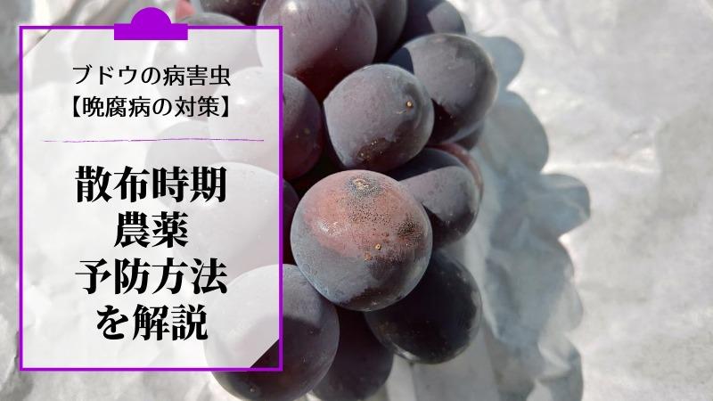 ブドウの晩腐病対策【散布時期や農薬・予防方法を解説】 427