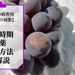ブドウの晩腐病対策【散布時期や農薬・予防方法を解説】 430