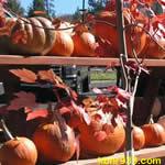 pumpkins-thumb