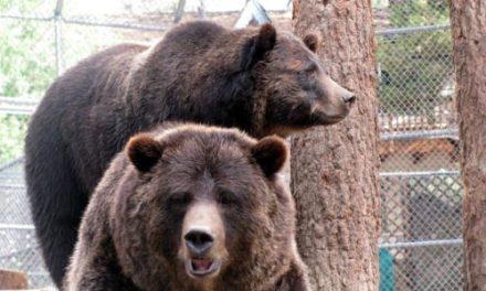 Always Be Bear Aware