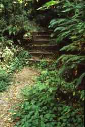 Cougar Mountain Regional Wildlife Park, ca. 1990 (ref ID 467.2.24)