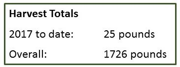 goat hill garden totals (3)
