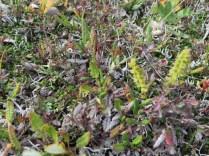 Tiny ferns