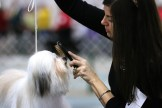 """Karen Warncke grooms a havanese that she bred at the Ingham County Kennel Club on Nov. 27, 2015 in the MSU pavilion in Lansing, Michigan. She has been showing and breeding dogs for three and a half years and got started when her friend who owned havanese introduced her to the sport. """"I wanted to show people how beautiful my dogs are. It's a lot of hard work and I'm very proud of them,"""" Warncke said."""
