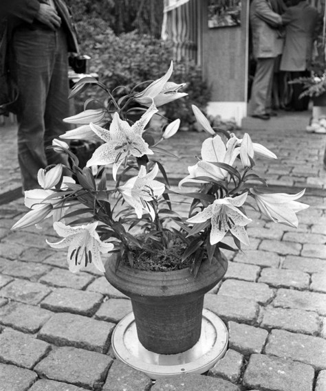 Lily Princess Gracia from Klaas de Jong, 1972