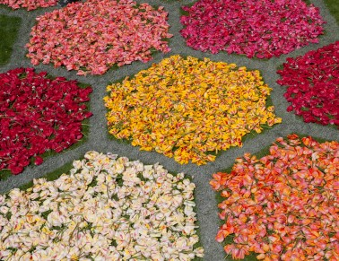 Hexagonal flowerbeds tulips detail