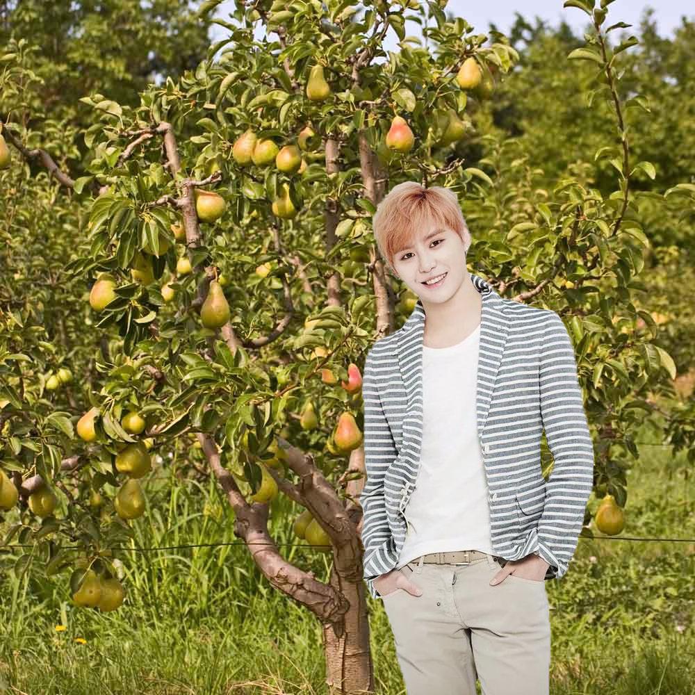 pear-tree-6