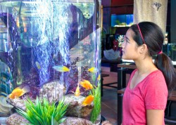 Shopping-at-Picasso's-Exotic-Aquatics