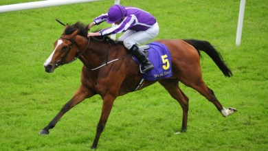 The Aidan O'Brien trained Minding. Photo: Horse Racing Ireland/HRI.ie