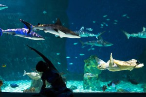 Yoga with the Sharks @ Loveland Living Planet Aquarium |  |  |