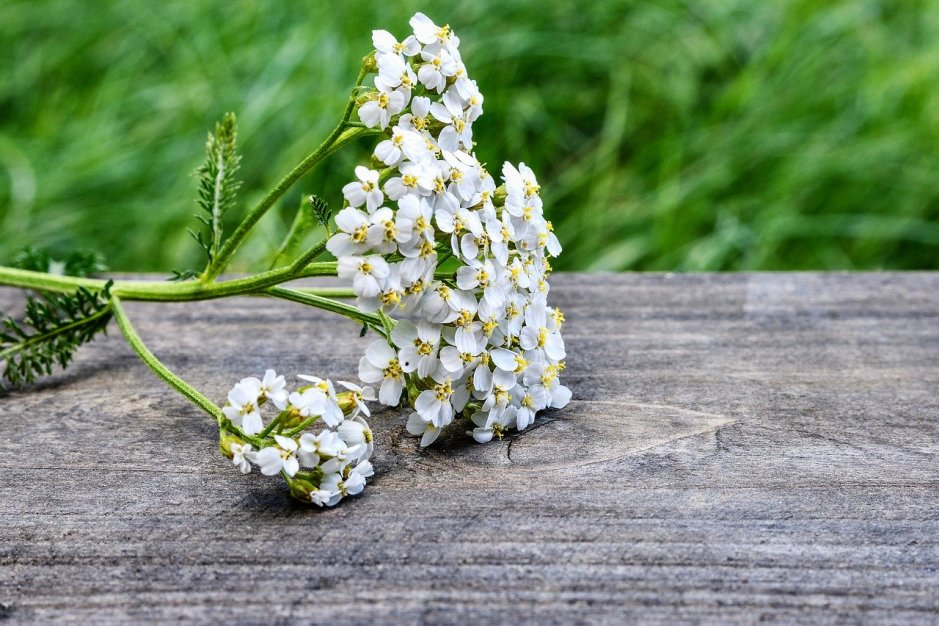 As herbals go, yarrow helps stop excessive bleeding.