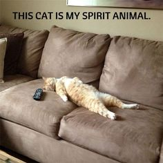 Cats do the darndest things!
