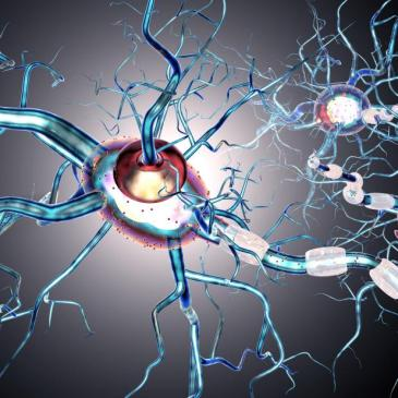 Research at the University of Alberta gives insight into Multiple Sclerosis disease process