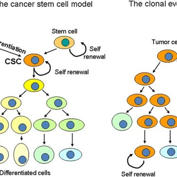 Challenges and Promises of Targeting Cancer Stem Cells – the Proposed Achilles' Heel of Cancer