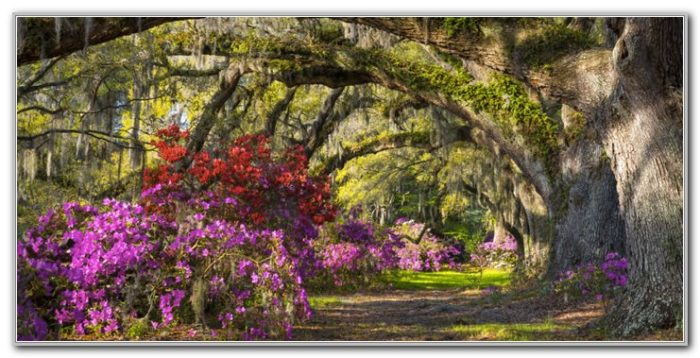 Airlie Gardens Wilmington Nc