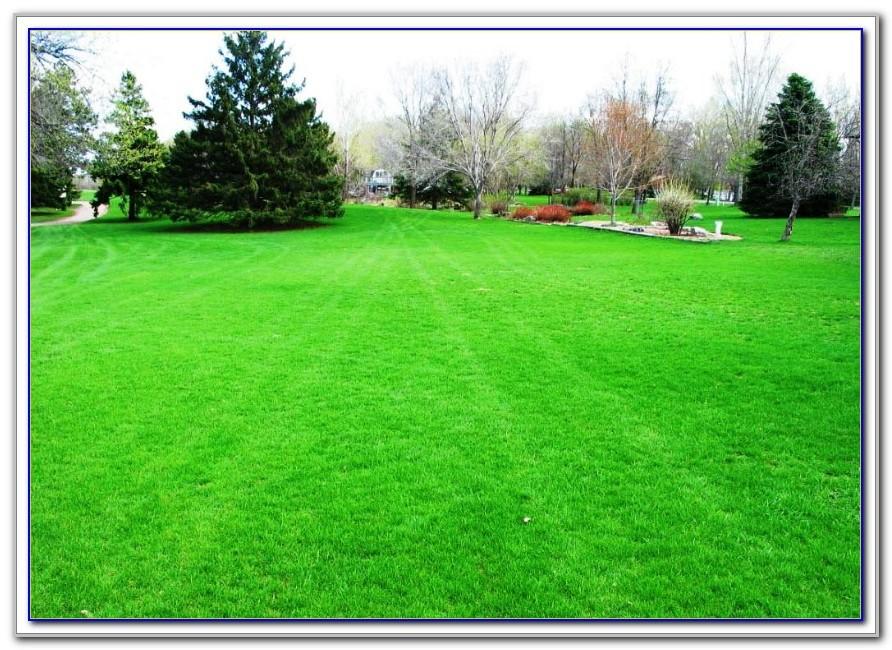 Bluegrass Lawn And Garden Shelbyville Ky
